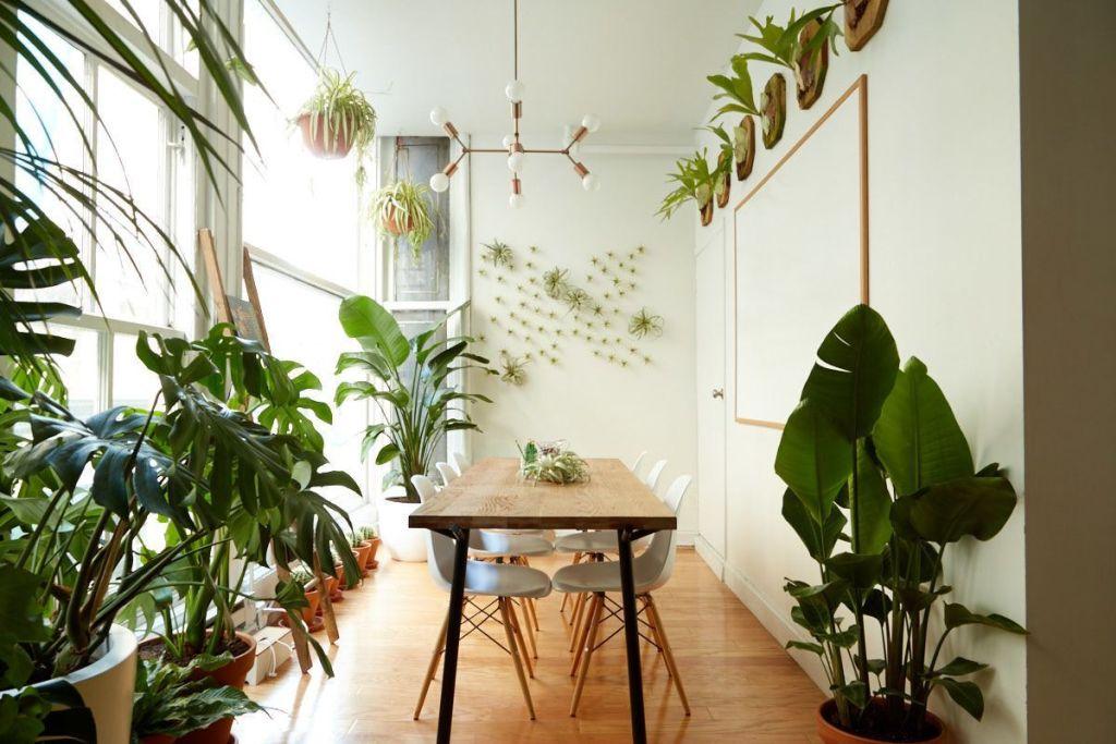 Houseplants Decor 20 - 24 Great Ideas for Home Plants