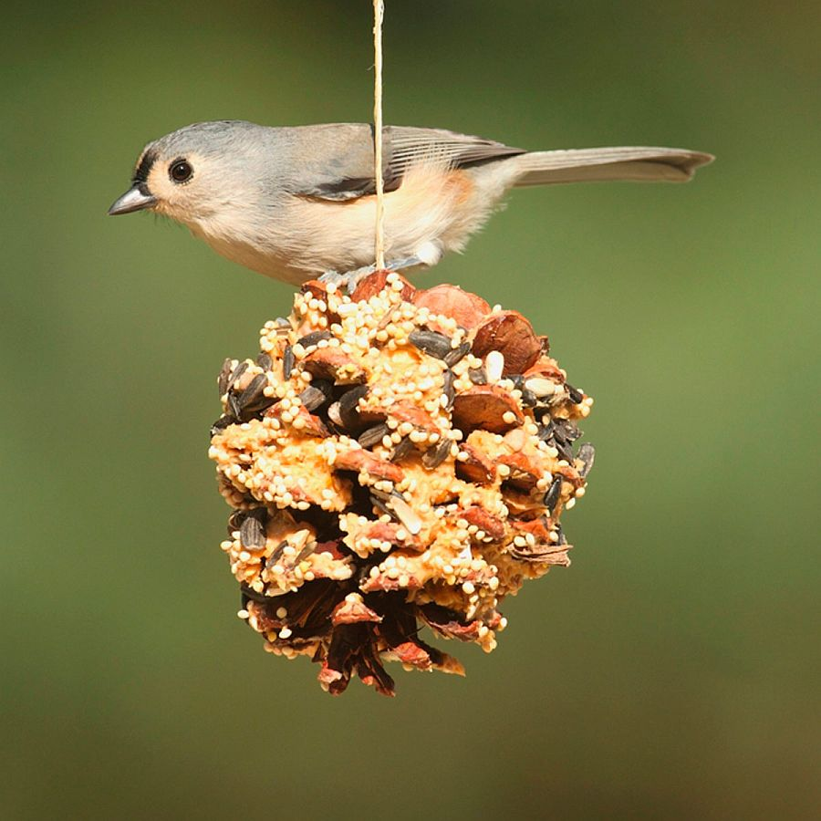 1559675287 550 40 diy bird feeder ideas for a live garden - 40 DIY Bird Feeder Ideas for a Live Garden