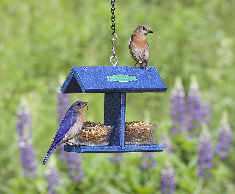 1559675287 713 40 diy bird feeder ideas for a live garden - 40 DIY Bird Feeder Ideas for a Live Garden