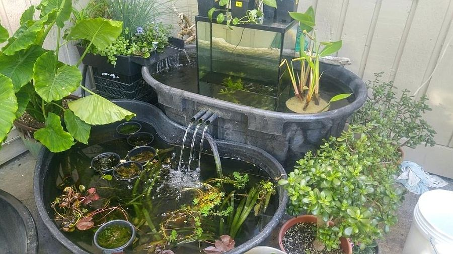 1559894566 40 25 cheap diy ponds to bring life to your garden - 25 Cheap DIY Ponds to Bring Life to Your Garden