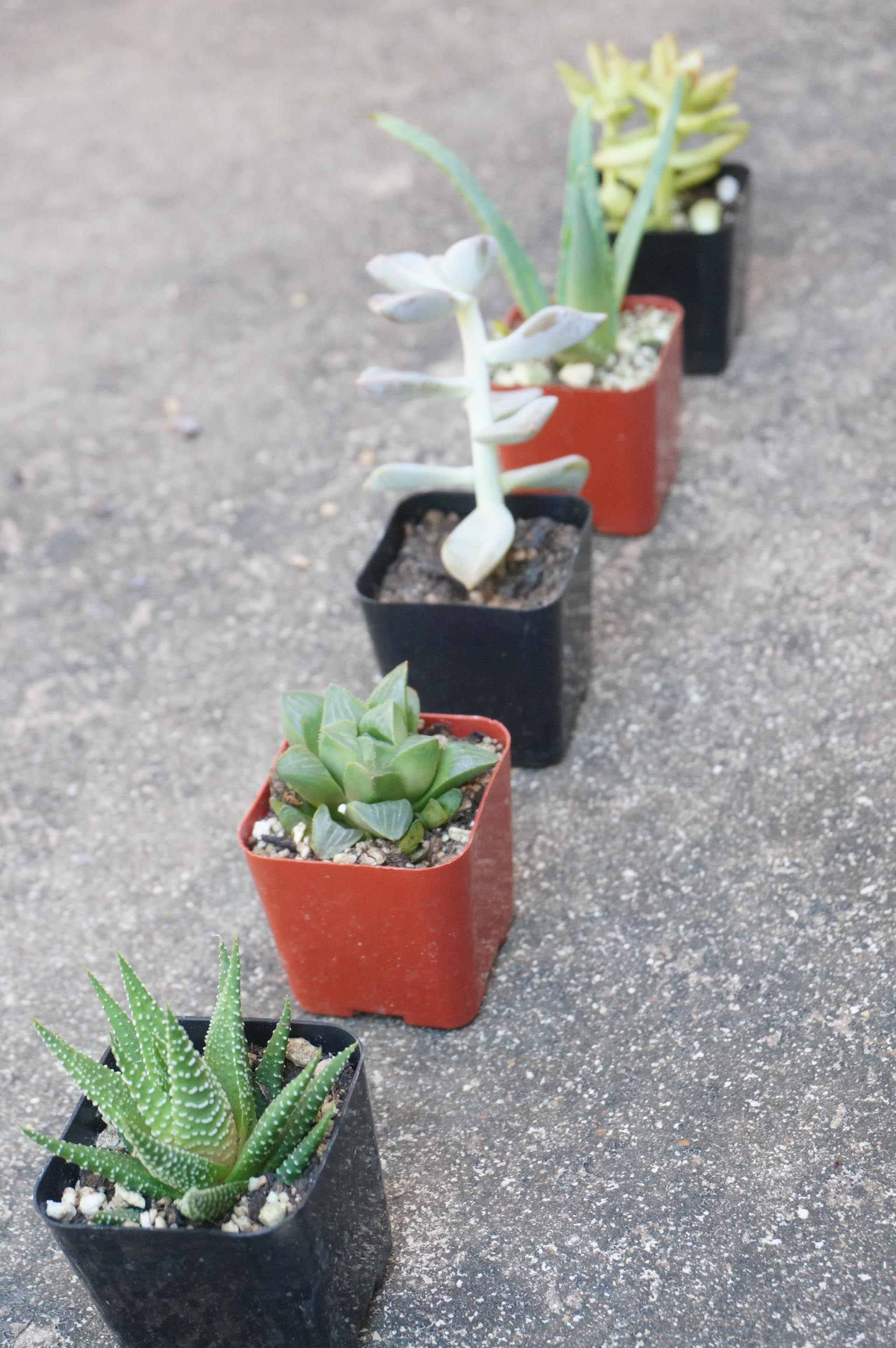1560782869 215 tips for planting a succulent garden - Tips for Planting a Succulent Garden