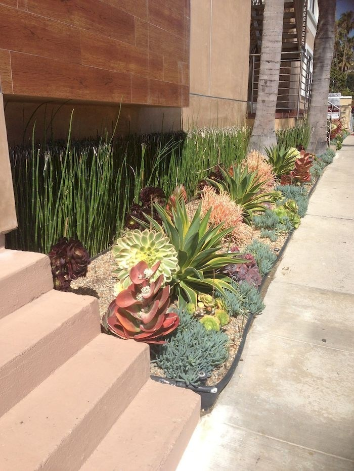 1560782869 279 tips for planting a succulent garden - Tips for Planting a Succulent Garden