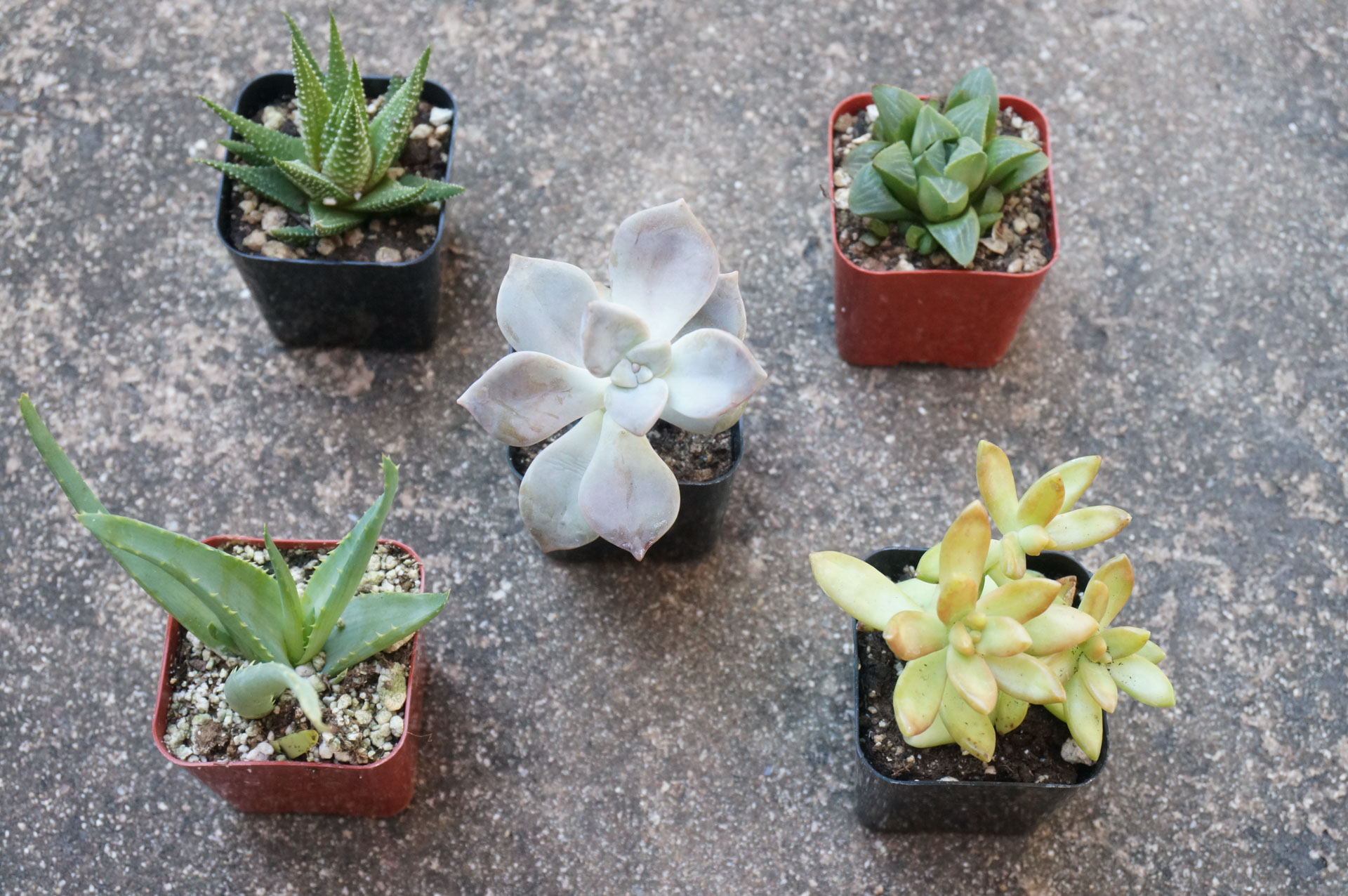 1560782869 476 tips for planting a succulent garden - Tips for Planting a Succulent Garden