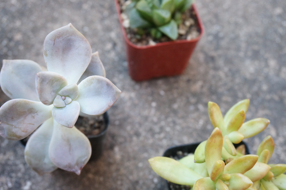 1560782869 620 tips for planting a succulent garden - Tips for Planting a Succulent Garden
