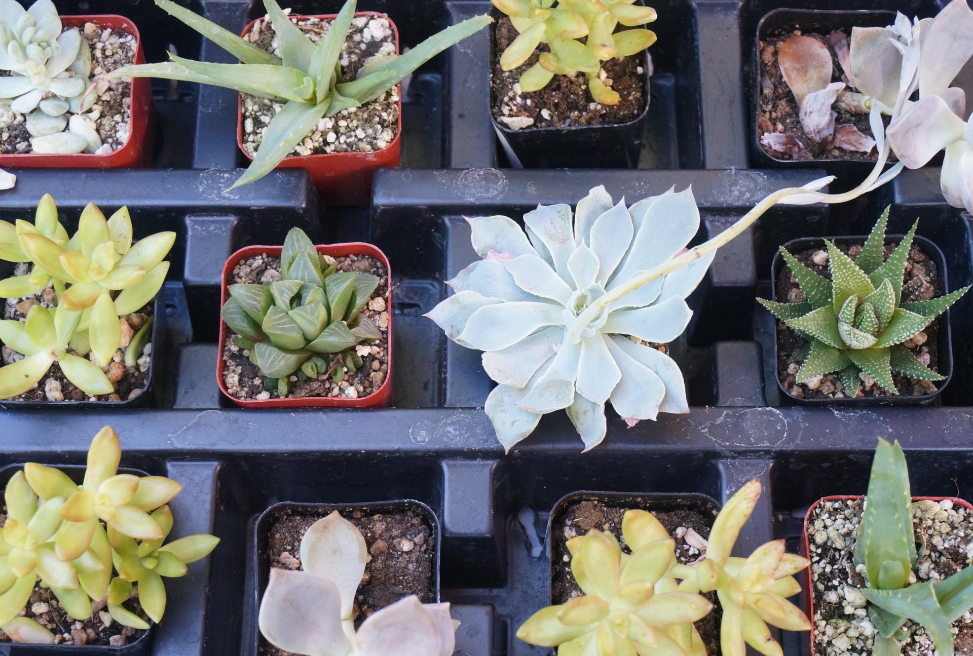 1560782869 656 tips for planting a succulent garden - Tips for Planting a Succulent Garden