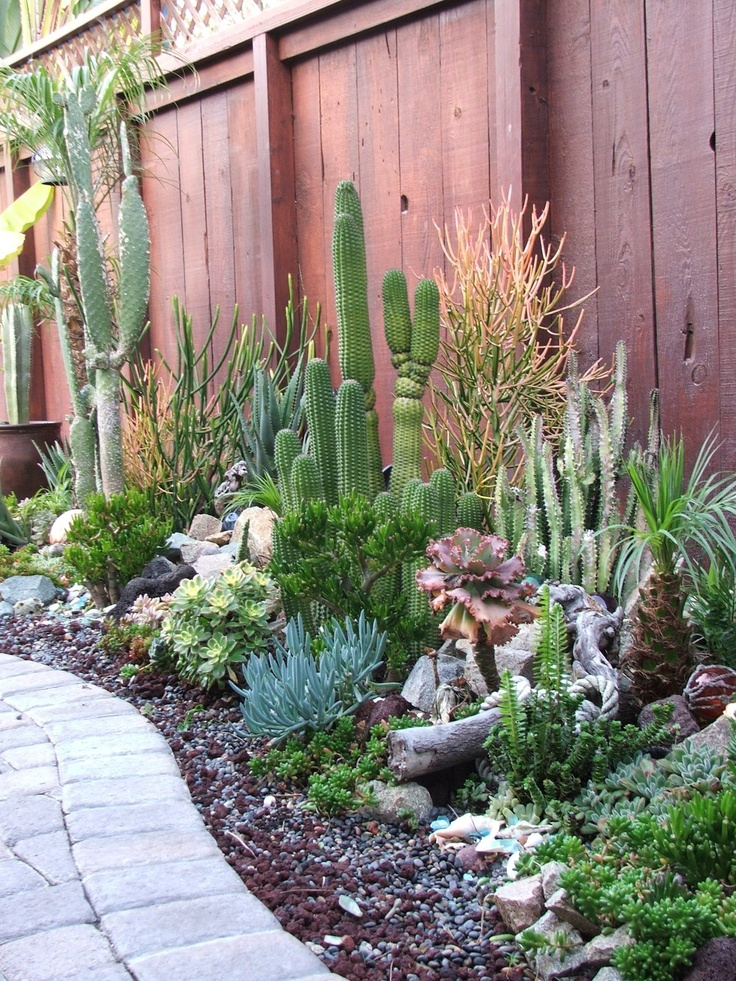 1560782869 842 tips for planting a succulent garden - Tips for Planting a Succulent Garden