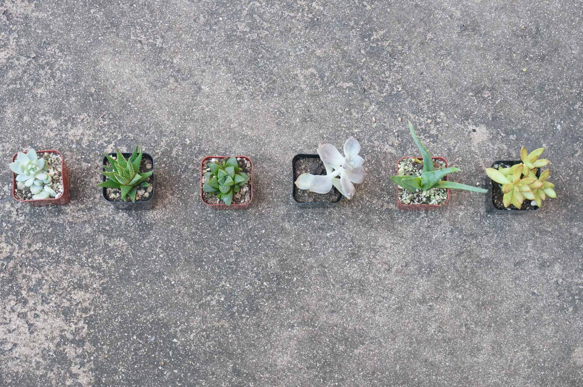 1560782870 136 tips for planting a succulent garden - Tips for Planting a Succulent Garden