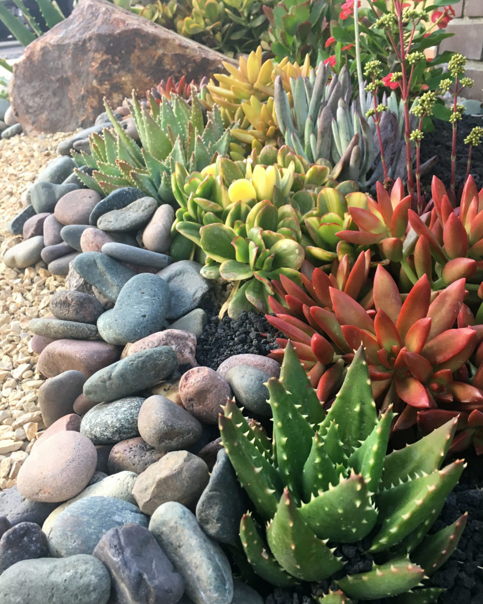 tips for planting a succulent garden - Tips for Planting a Succulent Garden