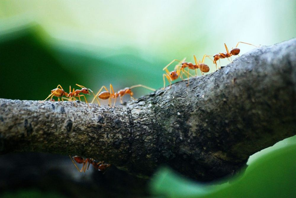 what kills ants instantly natural pet safe home remedies - What Kills Ants Instantly: Natural, Pet Safe Home Remedies