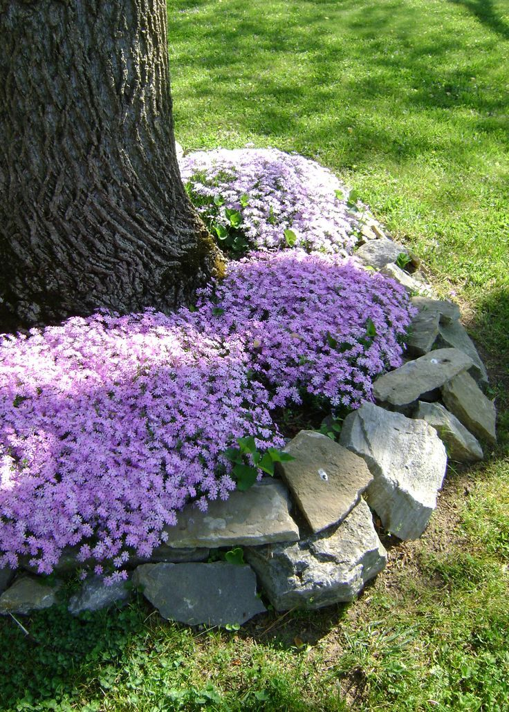 1565339254 869 how to use edging stones to make your garden better - How To Use Edging Stones To Make Your Garden Better